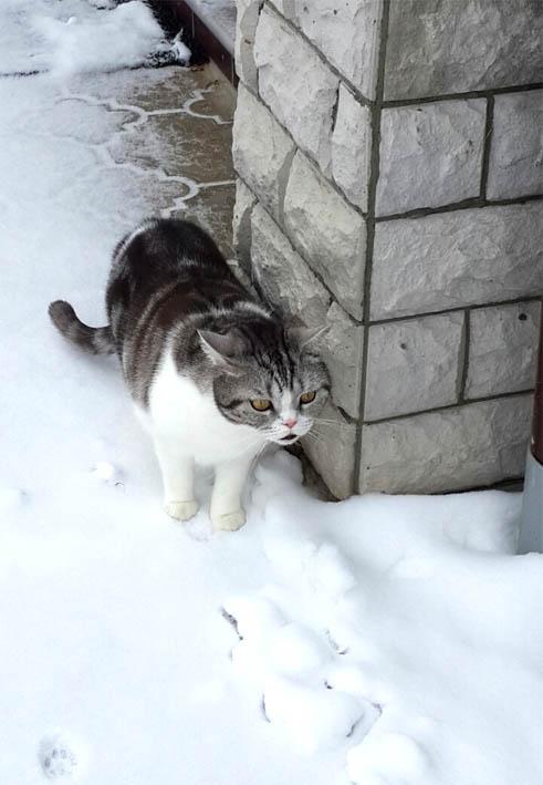 Джемалайкин встречает зиму