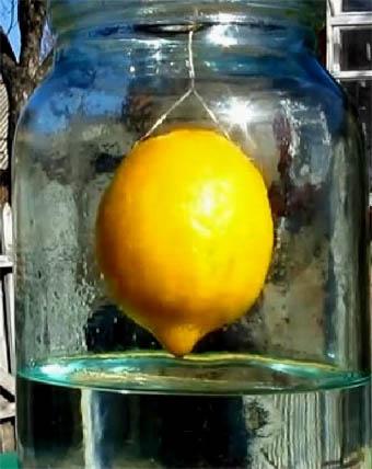 Рецепт - висельник лимонный