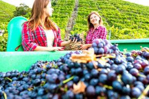 ЗГУ и ЗНМП - два основных термина российской квалификации вин