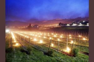 Неурожай винограда во Франции