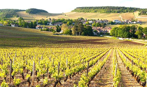 Наиболее вероятным местом возникновения Шардоне является Бургундия