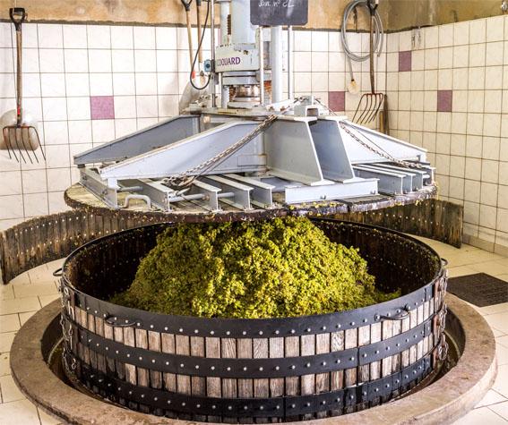 Производство вин из Шардоне